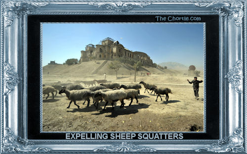 Expelling sheep squatters